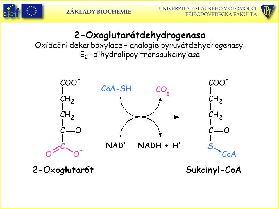 2-Oxoglutarátdehydrogenasa Oxidační dekarboxylace – analogie pyruvátdehydrogenasy.
