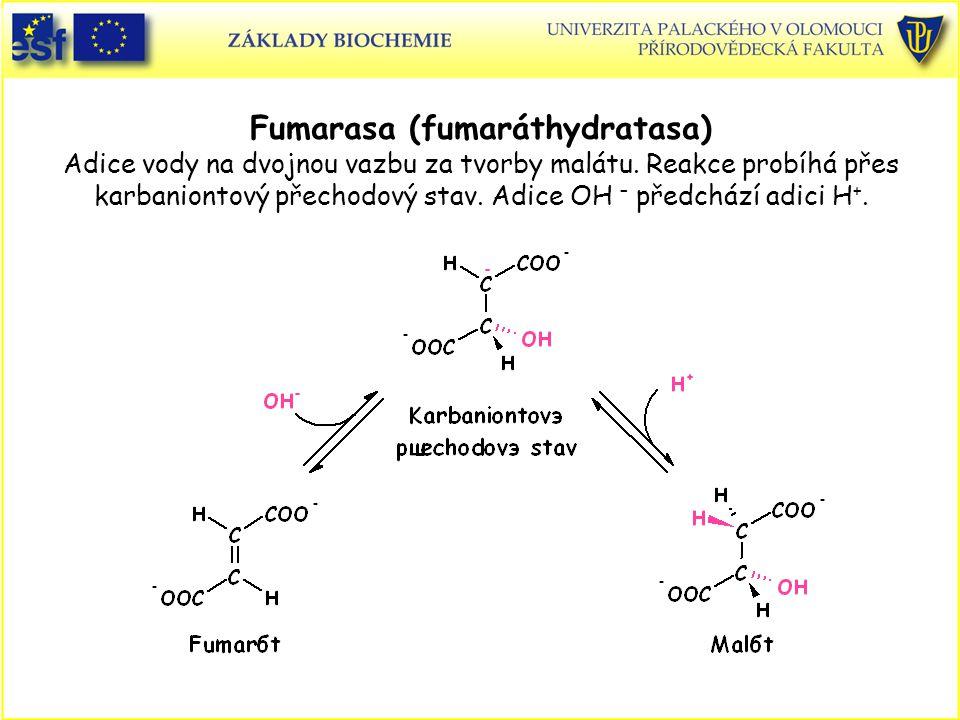 Fumarasa (fumaráthydratasa) Adice vody na dvojnou vazbu za tvorby malátu.