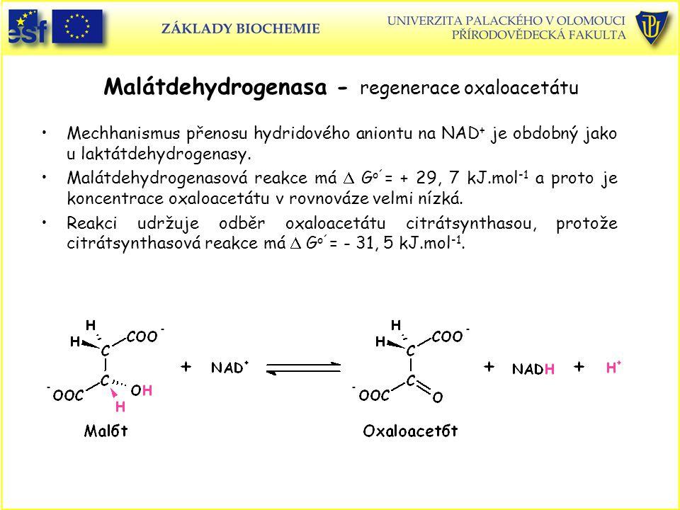 Malátdehydrogenasa - regenerace oxaloacetátu