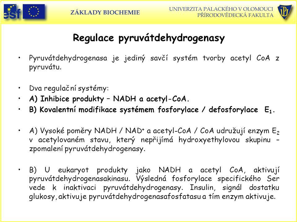 Regulace pyruvátdehydrogenasy