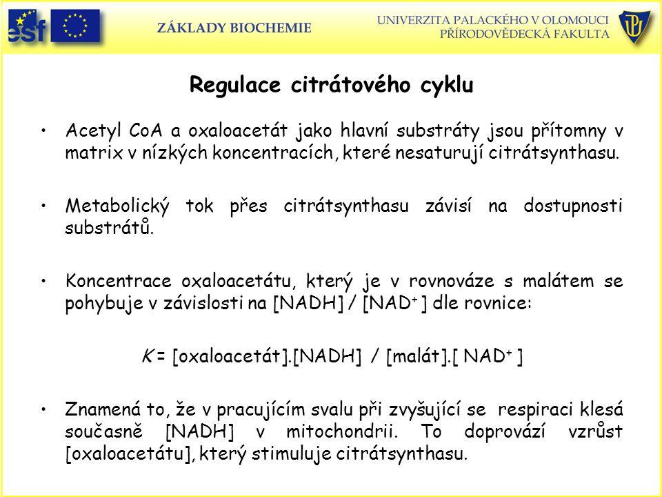 Regulace citrátového cyklu