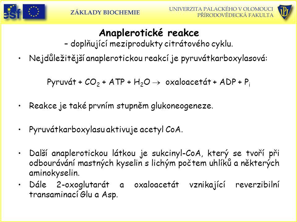 Anaplerotické reakce – doplňující meziprodukty citrátového cyklu.