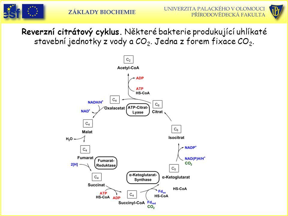 Reverzní citrátový cyklus