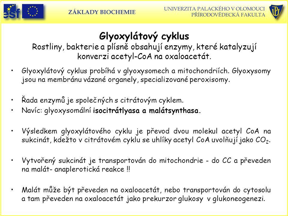 Glyoxylátový cyklus Rostliny, bakterie a plísně obsahují enzymy, které katalyzují konverzi acetyl-CoA na oxaloacetát.