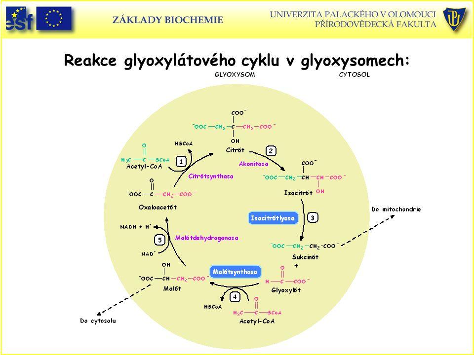 Reakce glyoxylátového cyklu v glyoxysomech: