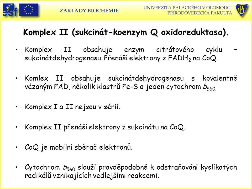 Komplex II (sukcinát-koenzym Q oxidoreduktasa).