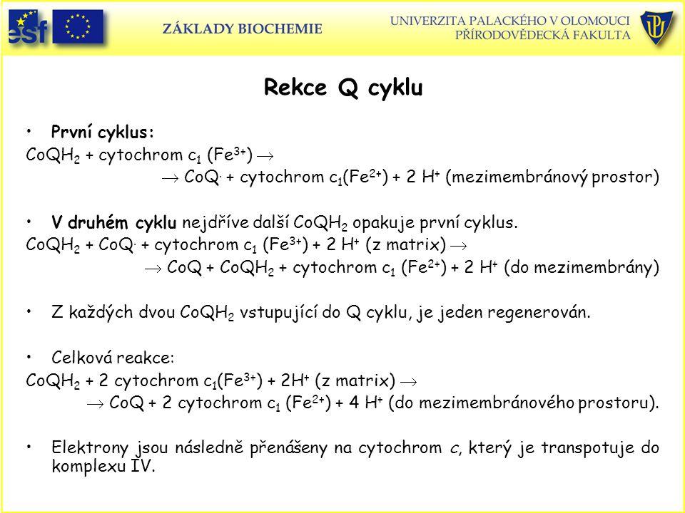 Rekce Q cyklu První cyklus: CoQH2 + cytochrom c1 (Fe3+) 