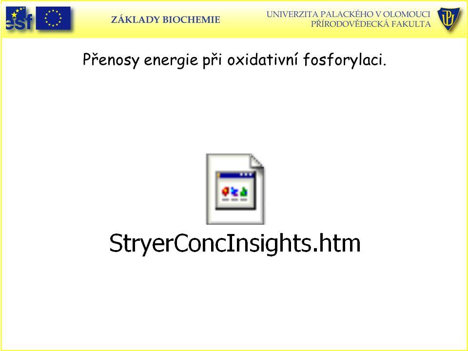 Přenosy energie při oxidativní fosforylaci.