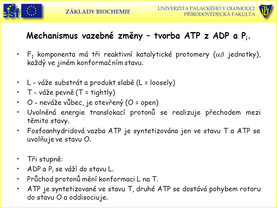 Mechanismus vazebné změny – tvorba ATP z ADP a Pi.