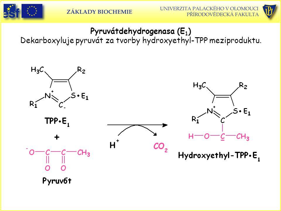 Pyruvátdehydrogenasa (E1) Dekarboxyluje pyruvát za tvorby hydroxyethyl-TPP meziproduktu.