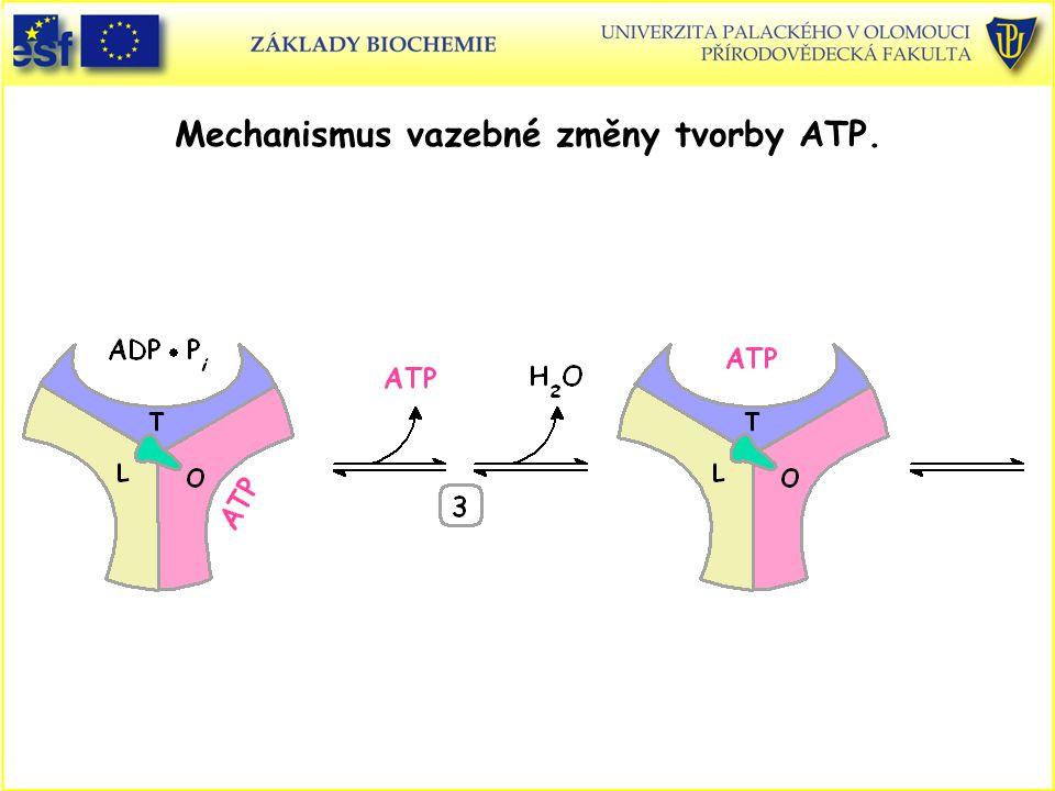Mechanismus vazebné změny tvorby ATP.