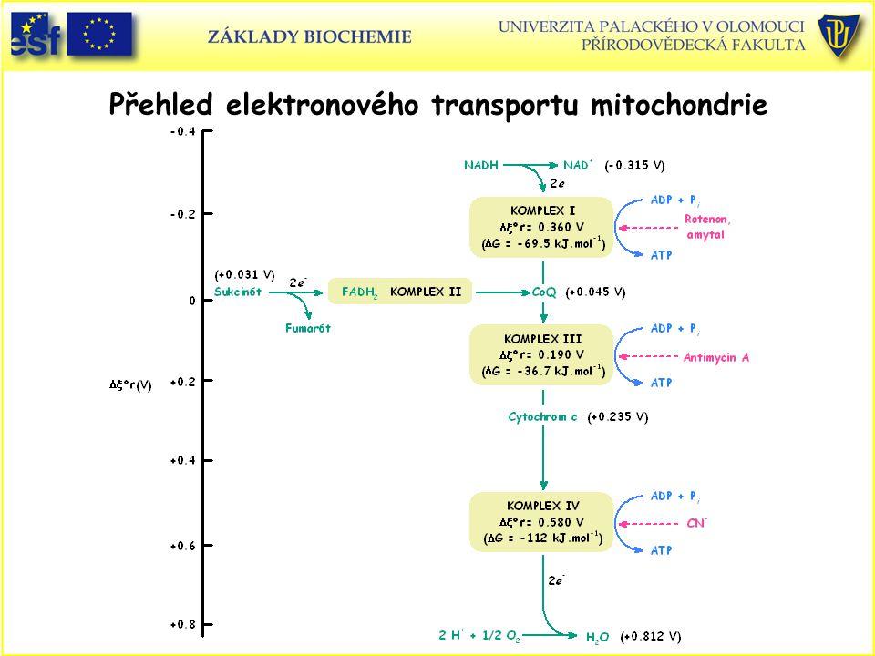 Přehled elektronového transportu mitochondrie