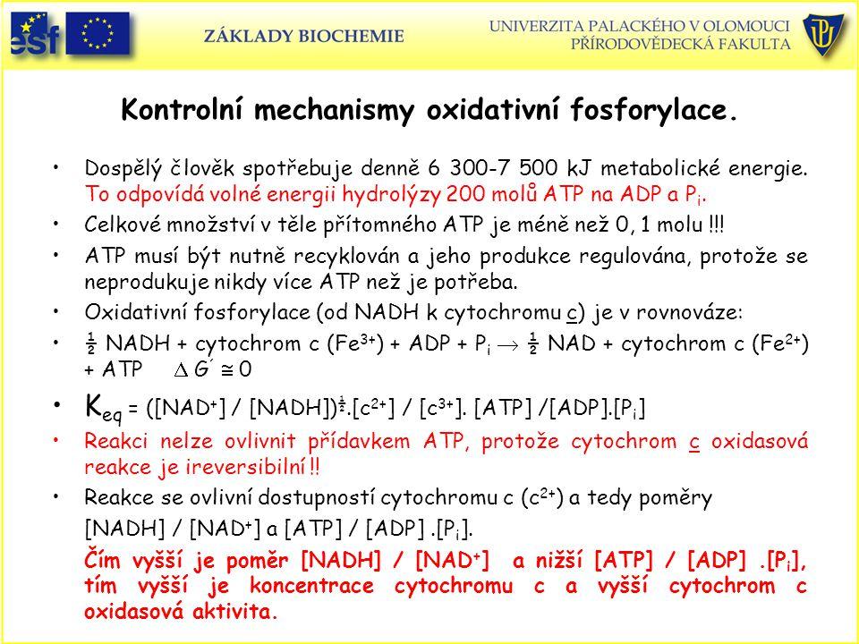 Kontrolní mechanismy oxidativní fosforylace.