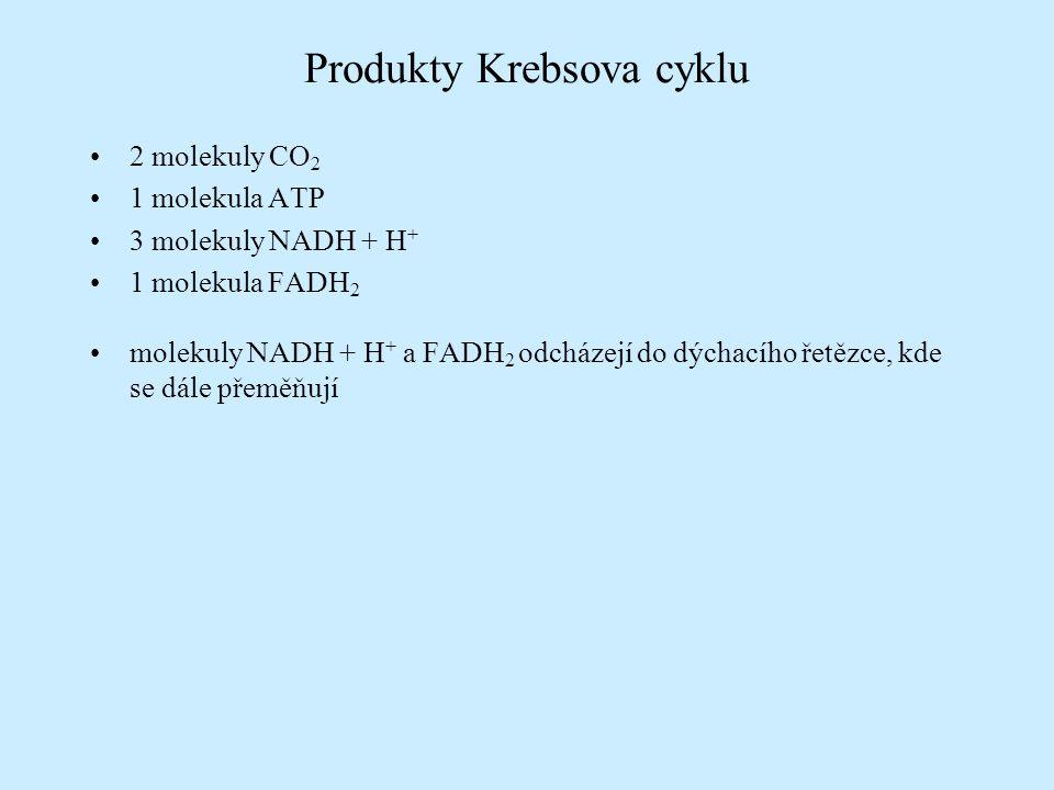 Produkty Krebsova cyklu