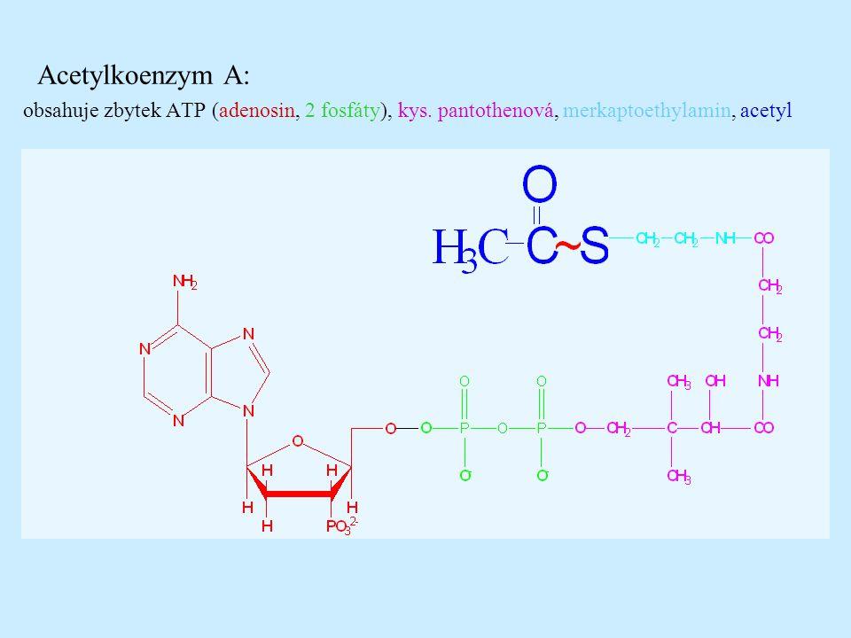 Acetylkoenzym A: obsahuje zbytek ATP (adenosin, 2 fosfáty), kys