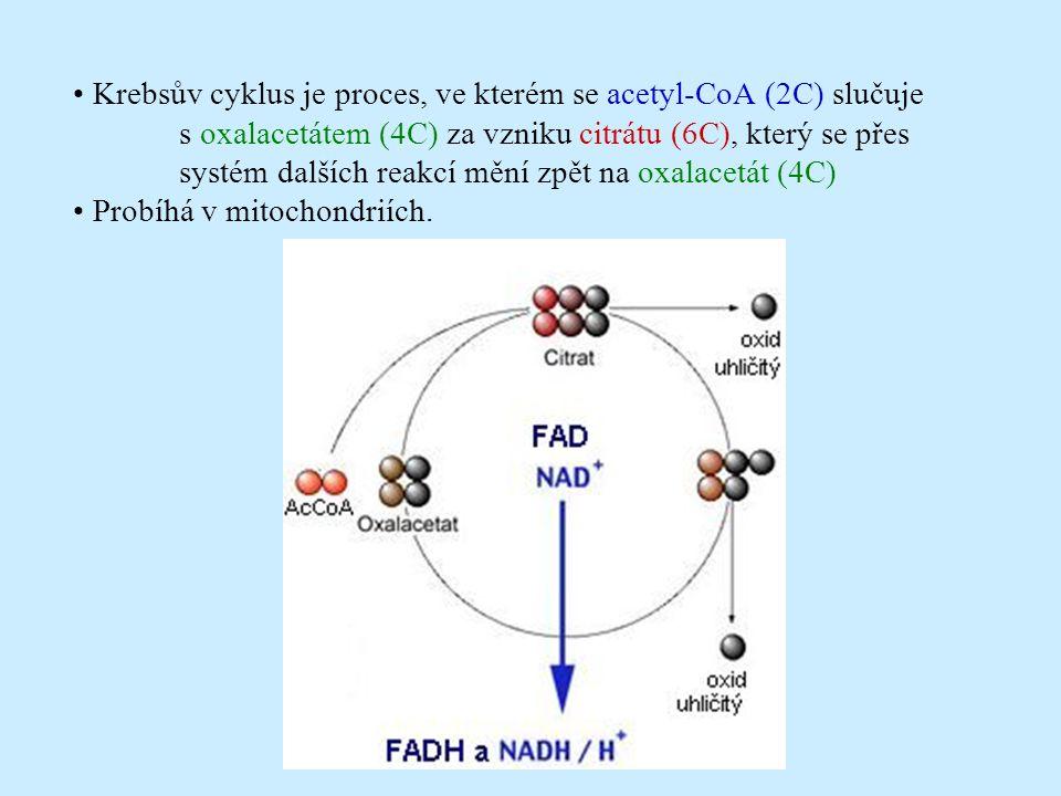 • Krebsův cyklus je proces, ve kterém se acetyl-CoA (2C) slučuje
