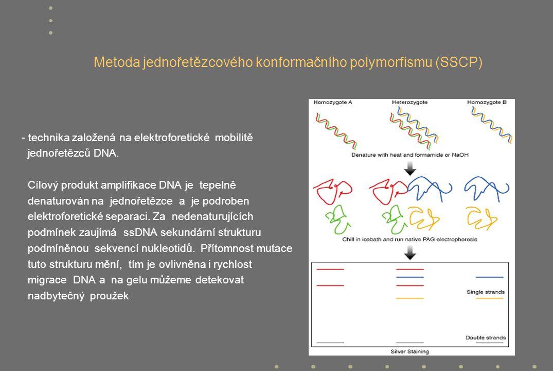 Metoda jednořetězcového konformačního polymorfismu (SSCP)