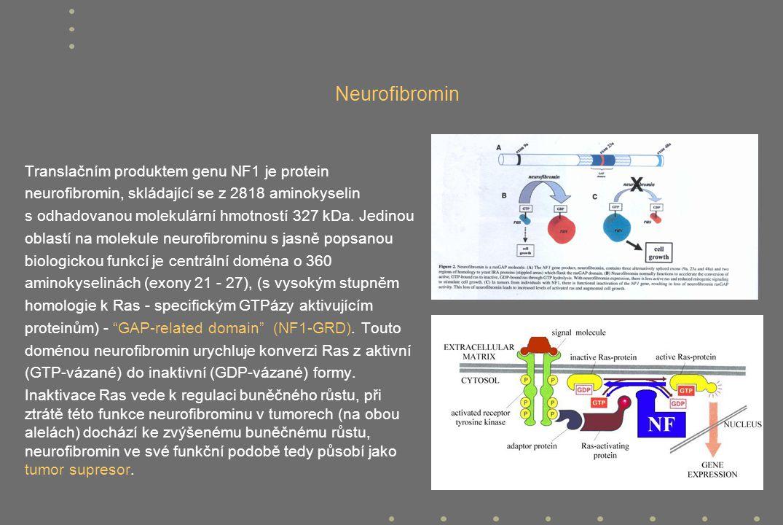 Neurofibromin Translačním produktem genu NF1 je protein
