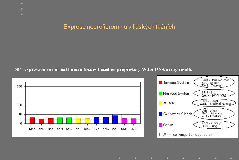 Exprese neurofibrominu v lidských tkáních