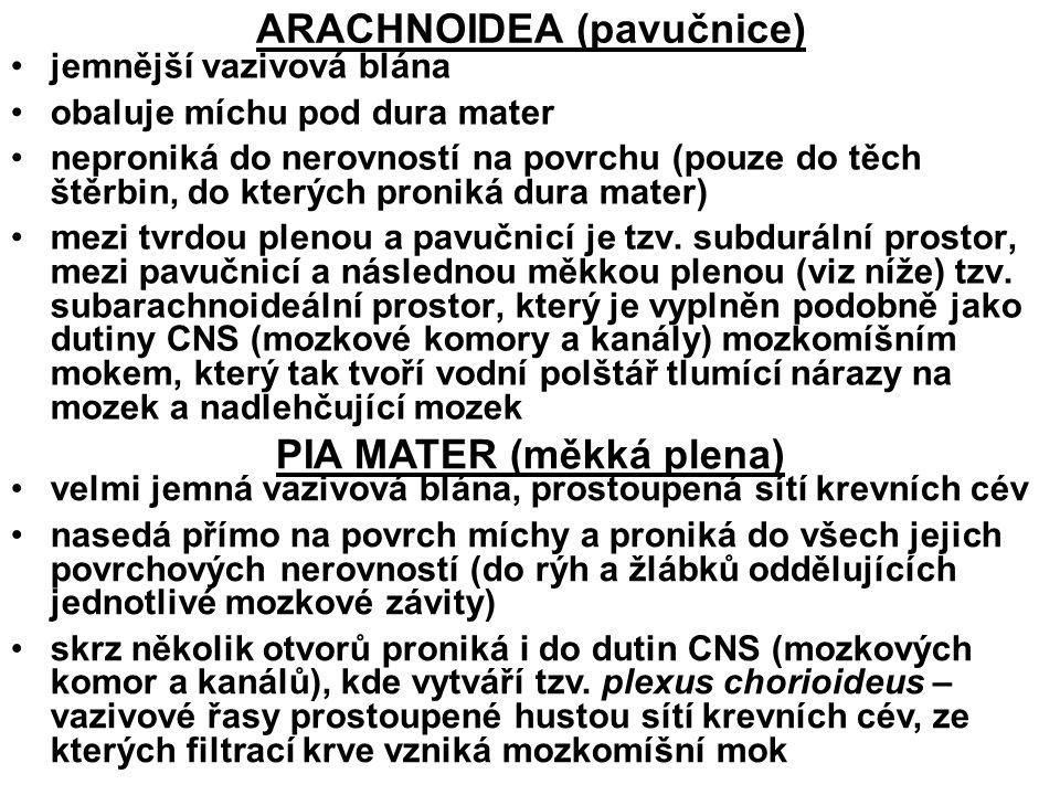 ARACHNOIDEA (pavučnice)