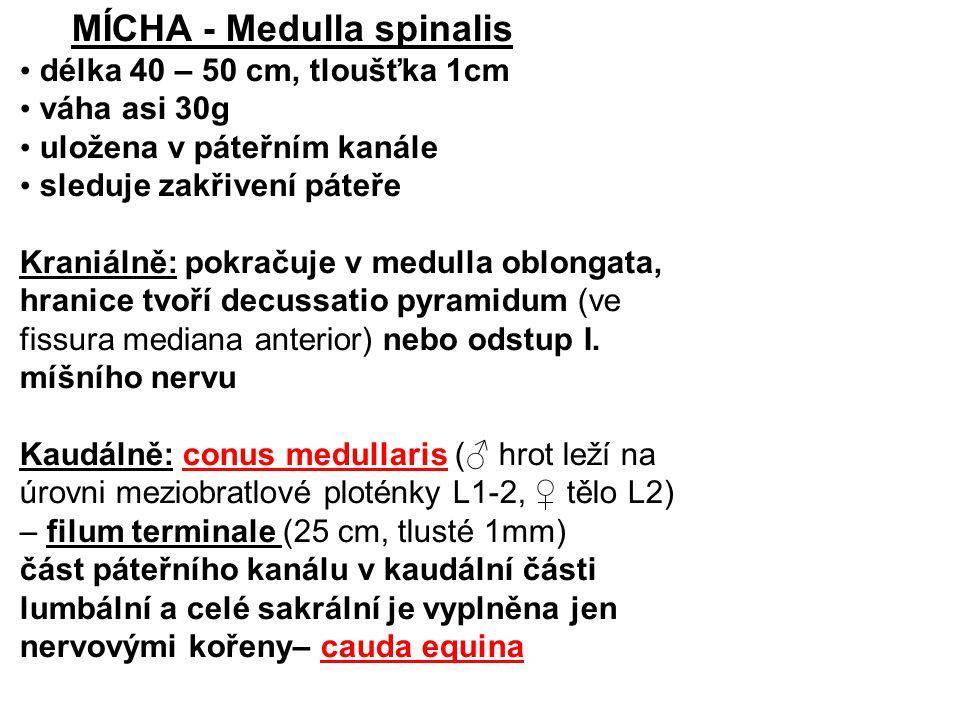 MÍCHA - Medulla spinalis