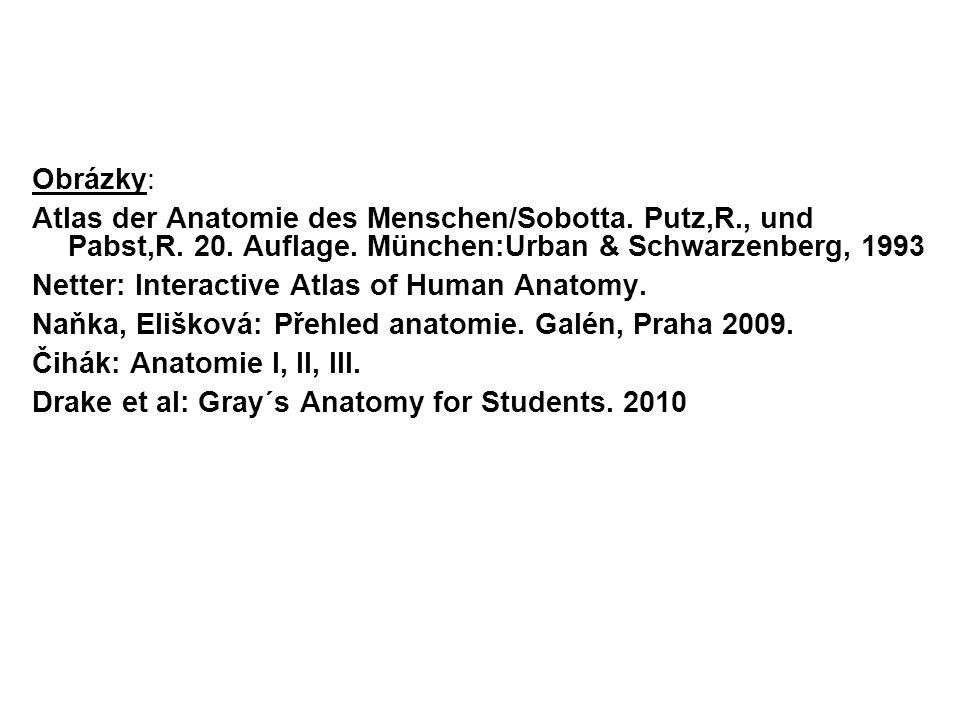 Obrázky: Atlas der Anatomie des Menschen/Sobotta. Putz,R., und Pabst,R. 20. Auflage. München:Urban & Schwarzenberg, 1993.