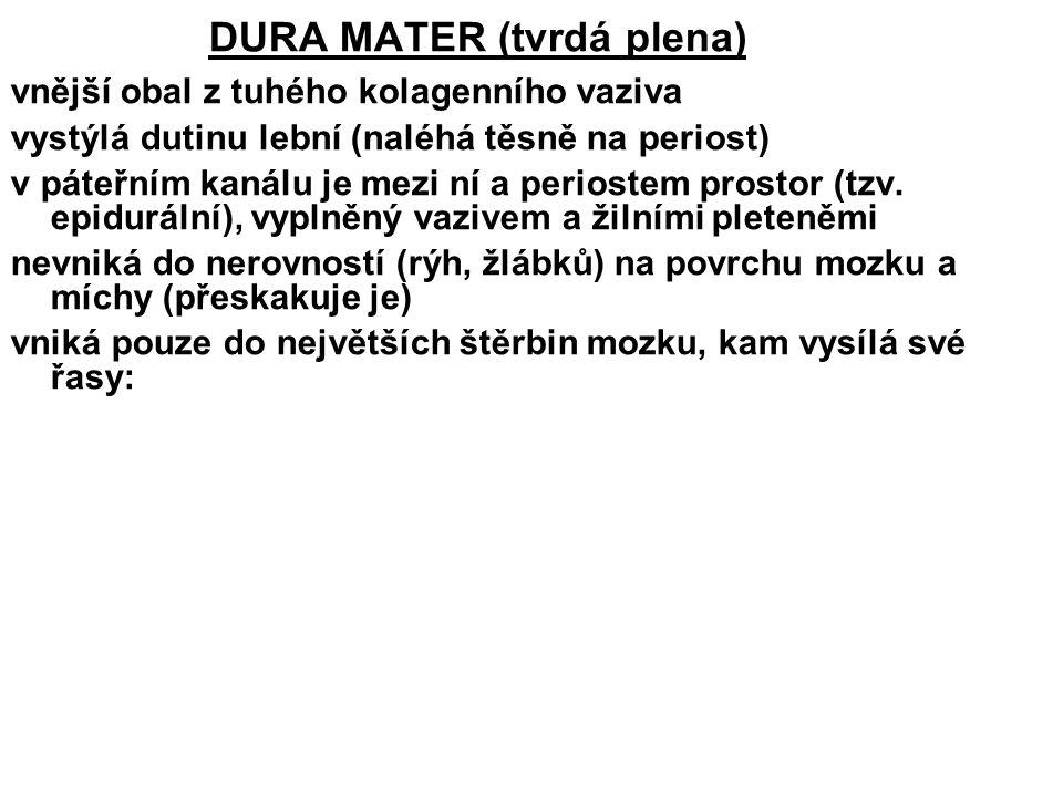DURA MATER (tvrdá plena)