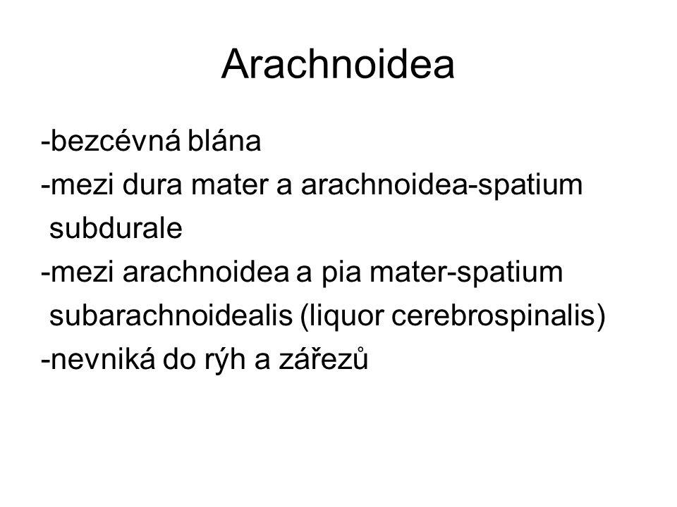 Arachnoidea -bezcévná blána -mezi dura mater a arachnoidea-spatium