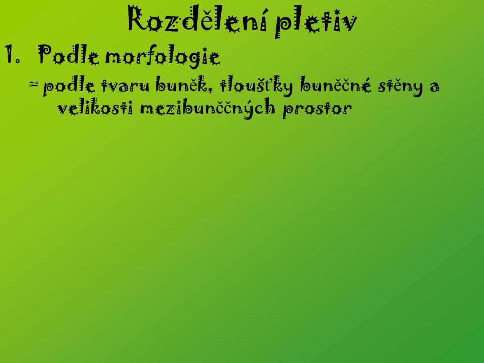 Rozdělení pletiv Podle morfologie