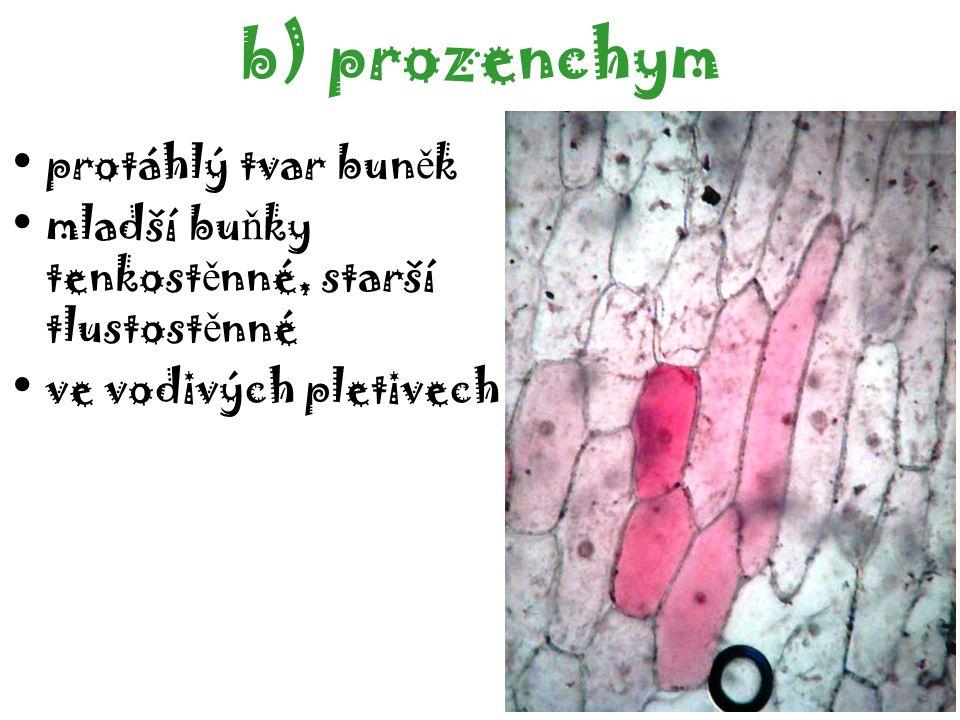 prozenchym protáhlý tvar buněk