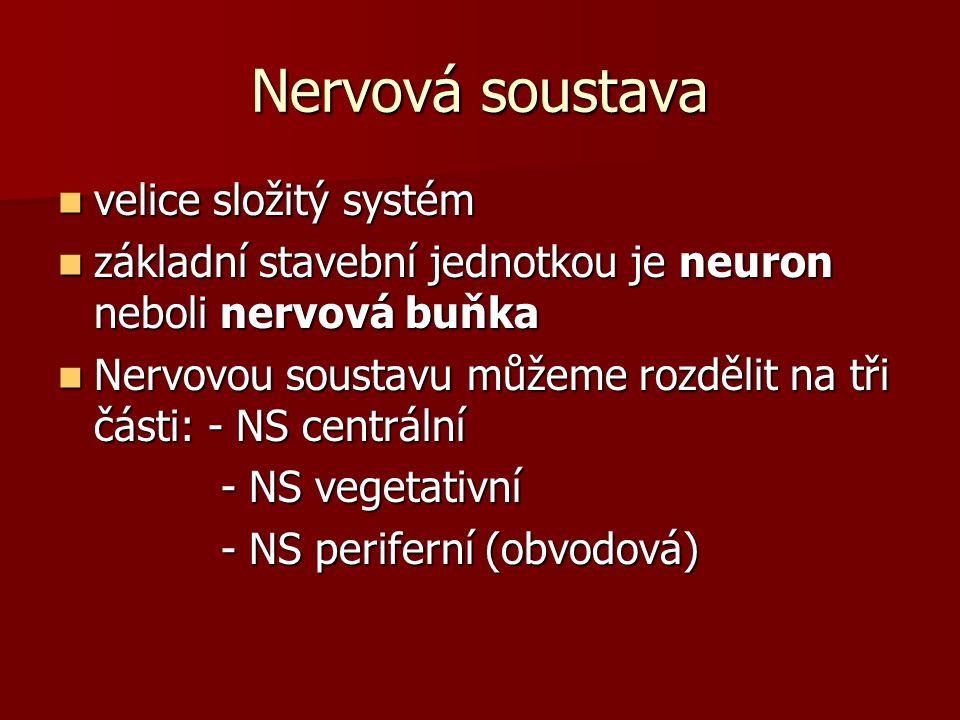 Nervová soustava velice složitý systém
