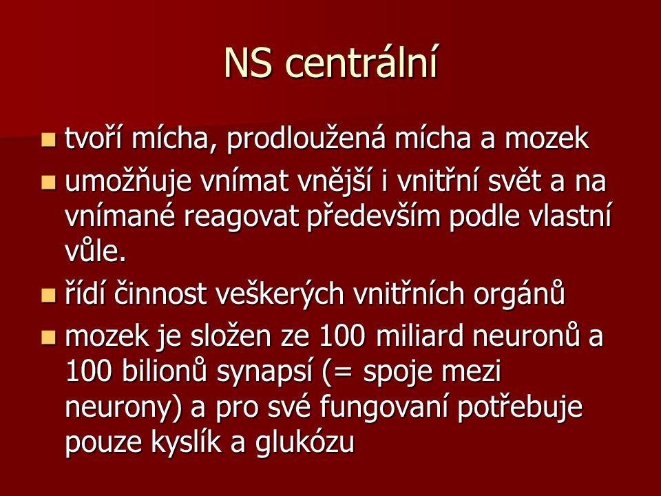 NS centrální tvoří mícha, prodloužená mícha a mozek