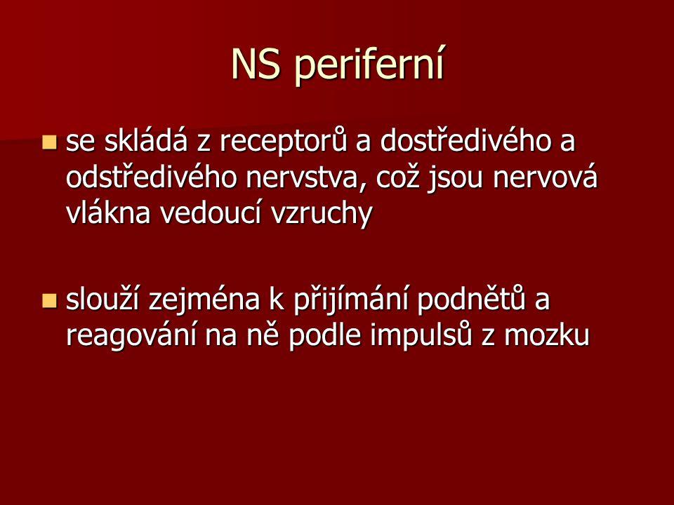 NS periferní se skládá z receptorů a dostředivého a odstředivého nervstva, což jsou nervová vlákna vedoucí vzruchy.