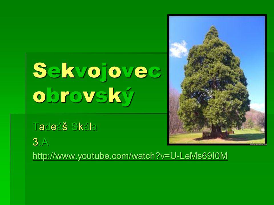 Tadeáš Skála 3.A http://www.youtube.com/watch v=U-LeMs69I0M