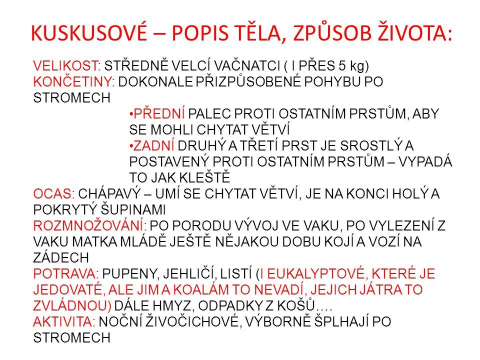 KUSKUSOVÉ – POPIS TĚLA, ZPŮSOB ŽIVOTA: