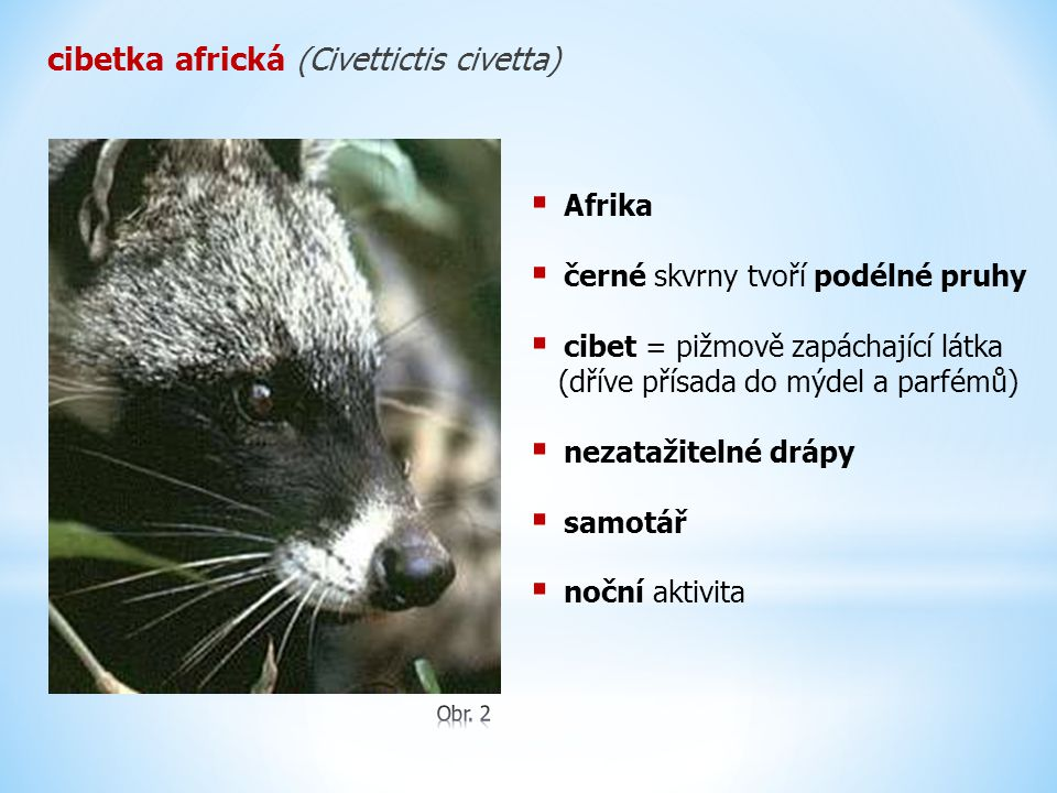 cibetka africká (Civettictis civetta)
