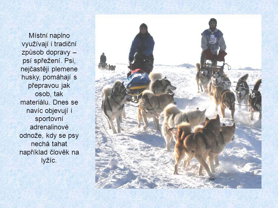 Místní naplno využívají i tradiční způsob dopravy – psí spřežení