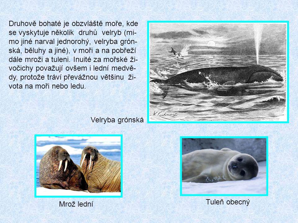 Druhově bohaté je obzvláště moře, kde se vyskytuje několik druhů velryb (mi-mo jiné narval jednorohý, velryba grón-ská, běluhy a jiné), v moři a na pobřeží dále mroži a tuleni. Inuité za mořské ži-vočichy považují ovšem i lední medvě-dy, protože tráví převážnou většinu ži-vota na moři nebo ledu.