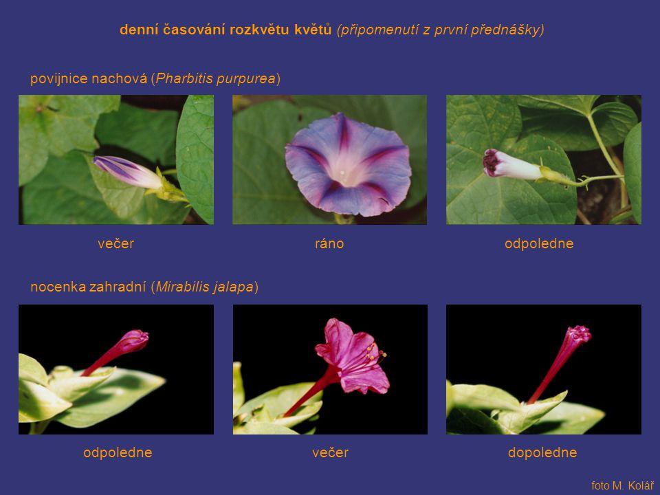 denní časování rozkvětu květů (připomenutí z první přednášky)