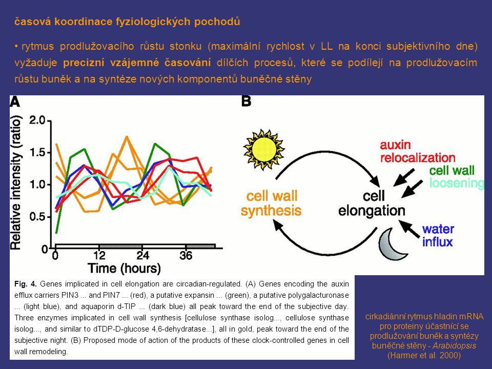 časová koordinace fyziologických pochodů