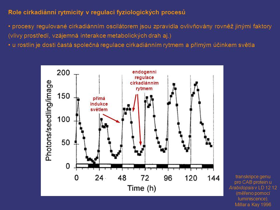 endogenní regulace cirkadiánním rytmem