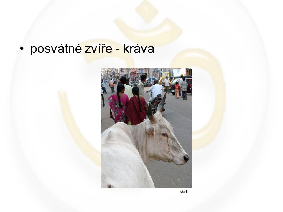 posvátné zvíře - kráva obr 9