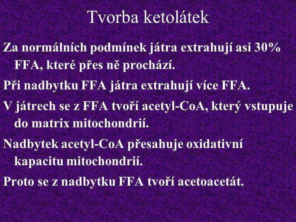 Tvorba ketolátek Za normálních podmínek játra extrahují asi 30% FFA, které přes ně prochází. Při nadbytku FFA játra extrahují více FFA.