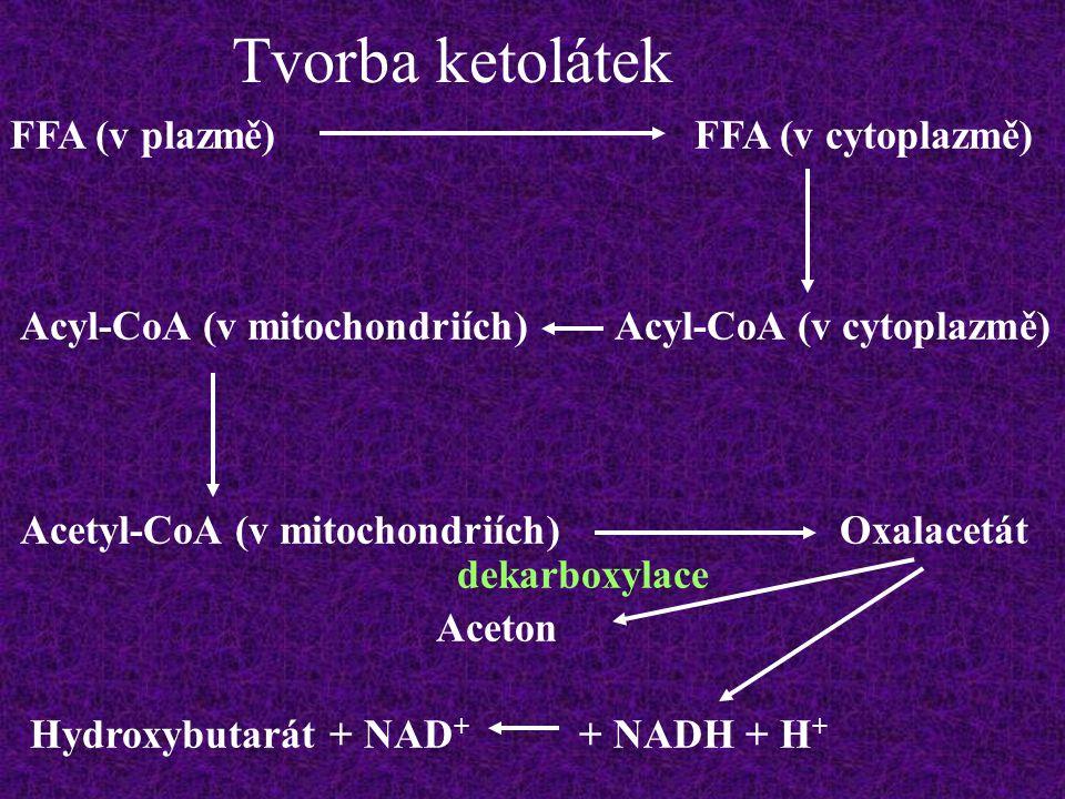 Tvorba ketolátek FFA (v plazmě) FFA (v cytoplazmě)