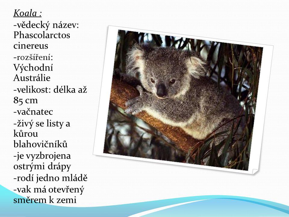 Koala : -vědecký název: Phascolarctos cinereus. -rozšíření: Východní Austrálie. -velikost: délka až 85 cm.
