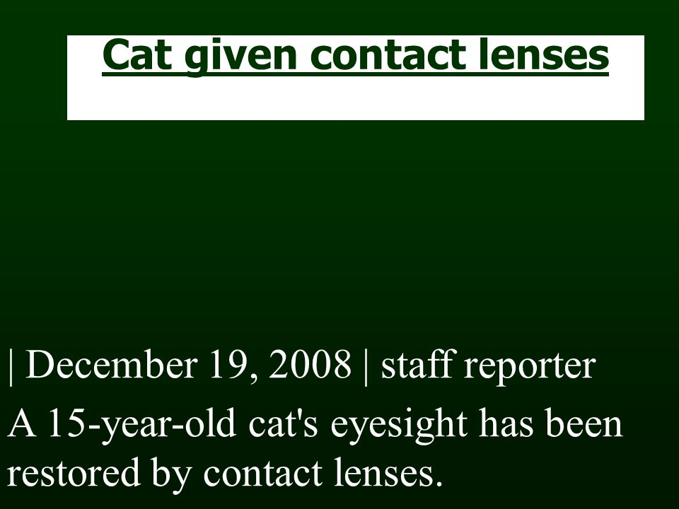 Cat given contact lenses