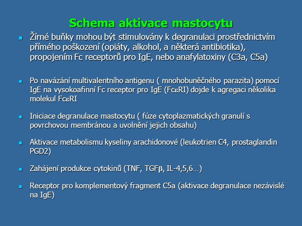 Schema aktivace mastocytu