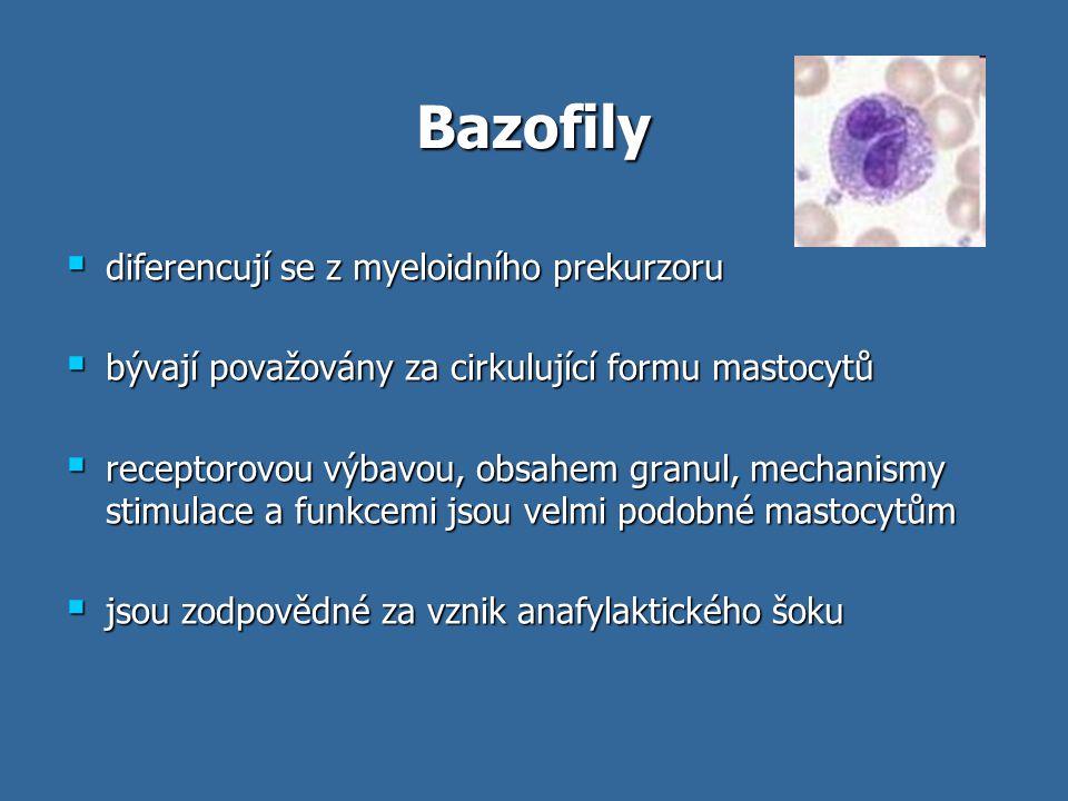 Bazofily diferencují se z myeloidního prekurzoru