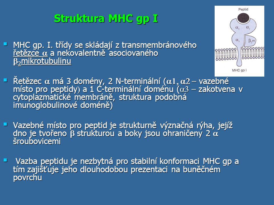 Struktura MHC gp I MHC gp. I. třídy se skládají z transmembránového řetězce a a nekovalentně asociovaného b2mikrotubulinu.