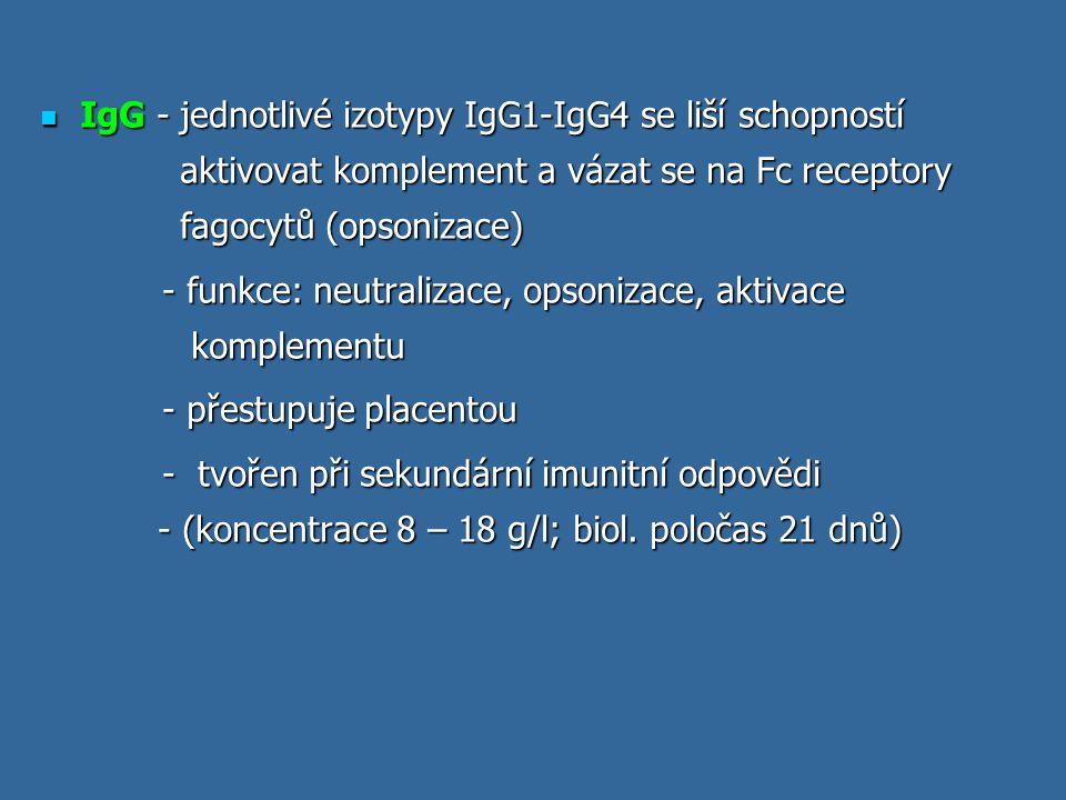 IgG - jednotlivé izotypy IgG1-IgG4 se liší schopností aktivovat komplement a vázat se na Fc receptory fagocytů (opsonizace)